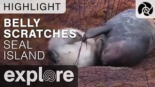 Download Seal Scratches Belly - Live Cam Highlight Video
