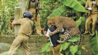 Download Leopard Attacks Tourist Video