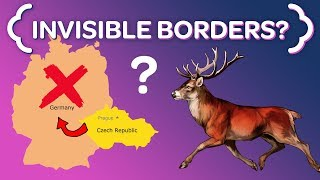Download Why These Czech Deer NEVER Cross the German Border Video