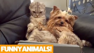Download Funniest Pets & Animals of the Week | Funny Pet Videos Video