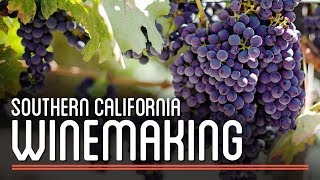 Download Winemaking in Southern California | How to Brew Everything Video