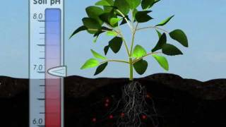 Download Plant Nutrition: Mineral Absorption (Part One) Video