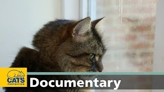 Download How cats understand the world around them: The world according to cats, episode five Video
