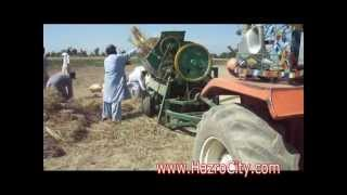 Download Wheat Treasure at Hazro Lakorhi road in Chhachh valley,May, 2012 Video