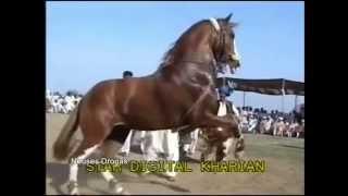 Download ″BATALLA DE CABALLOS BAILADORES″ PAQUISTAN vs MEXICO Video