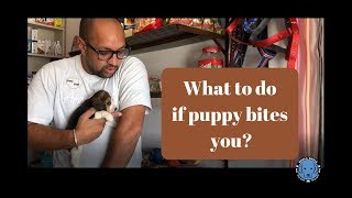 Download What to do if Puppy bites you? - Bhola Shola Video