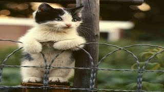Download Cats Talking With Their Humans | Funny Cats Yelling Compilation Video