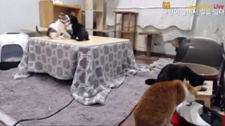 Download 애기 고양이들의 결투 2 Video