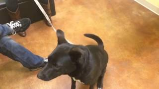 Download Dogs Catching Treats In SloMo 14 Video