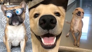 Download If You Don't LAUGH, you will BE Very LUCKY (ANIMALS EDITION) YLYL Video