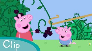 Download Peppa Pig - The Blackberry Bush Video