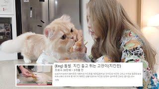Download (Eng) 치킨 물고 튀던 고양이, 이번에는 그냥 줄까... Video