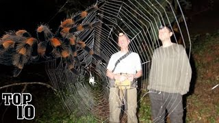 Download Top 10 Biggest Spiders In The World Video