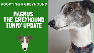 Download Adopting a Greyhound- Magnus tummy trouble update Video
