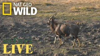 Download Safari Live - Day 2 | Nat Geo WILD Video
