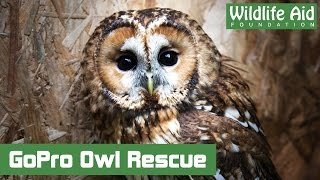 Download GoPro quick rescue - Owl in a living room Video
