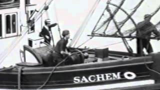 Download About Reefnet Salmon Video