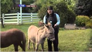 Download Donkeys as pets - Ask a vet with Dr. Jyl Video
