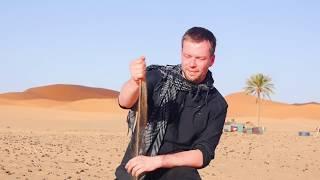 Download Leopardgecko Tutorial Teil 1 - Lebensraum, Terrarium und Wärme Video