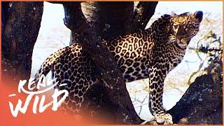 Download Makadikgadi: Wild Animals Of Botswana | [Predators And Preys Documentary] | Wild Things Video