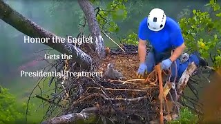 Download AMAZING Rescue of Baby Eagle- Honor Gets the Presidential Treatment Video