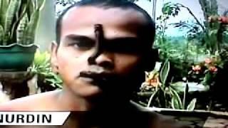 Download Makhluk pemakan ulat bulu. Courtesy of Trans TV Indonesia 12:10 WIB 14 April 2011 Video