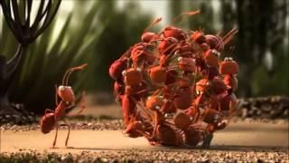 Download Đoàn kết là sức mạnh - Phim hoạt hình 3D ý nghĩa Video