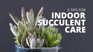 Download Indoor Succulent Care: 5 Tips for keeping your indoor succulents healthy Video