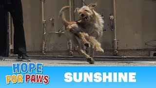 Download Oh wow, this rescue turned to be INTENSE as the dog was fighting for her life!!! Video