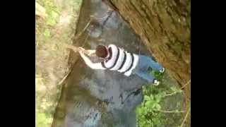 Download Tree Branch Swinging Fail Video