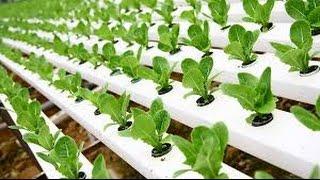 Download Hydroponic Gardening - Grow Organic Plants Fast Video
