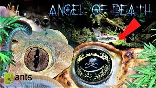 Download ANGEL OF DEATH/Guardian Goblin/DEATH SPRITES: Creatures Saving My Ant Empire Video