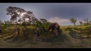 Download 360 4K Video Elephant walk, Oculus Rift VR - Photos of Africa Video