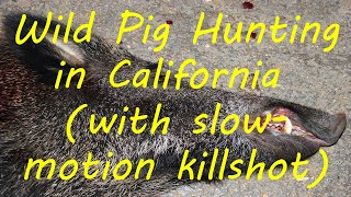 Download Wild Pig Hunting in California (with slow motion killshot) Video
