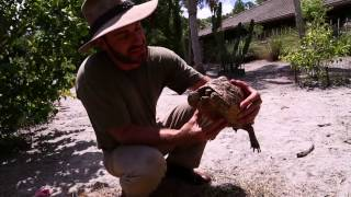 Download Leopard Tortoise Guide Video