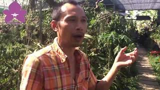 Download Hoa Lan TV: Thăm Vườn Lan Ngọc Lan Viên Của Vua Lan Đất Hà Thành Trần Tuấn Video