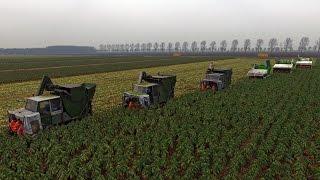 Download Brussels sprout harvesting XXL | 6 Tumoba & Jamafa harvesters | Gebr. Herbert Video