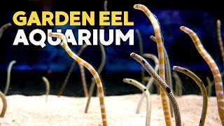 Download Garden Eel Tank + Takashi Amano Tanks @ Sumida Aquarium Tokyo Skytree Video