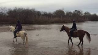 Download Endurance and Trail Horses For Sale: Scheherazade Arabians Video