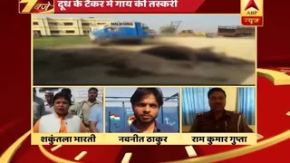 Download 6 cows found dead in a milk tanker caught on Aligarh Kanpur Highway Video