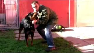 Download Rottweiler Baco: Gefahr oder Familiensegen? Video