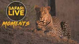 Download Hungry Hosana on the Hunt Again! Video