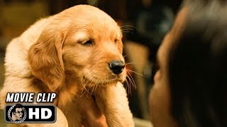 Download THE ART OF RACING IN THE RAIN Clip - Pick of The Litter (2019) Video