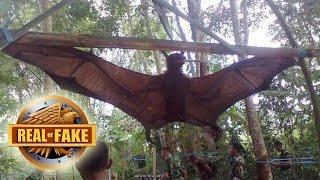 Download WORLD'S BIGGEST BAT CAPTURED - real or fake Video