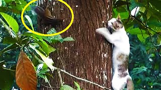 Download Cat climbs a very big tree to catch a squirrel ! Video