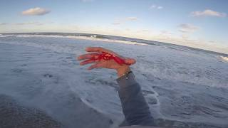 Download I GET BIT BY THE WORST THING YOU CAN CATCH SURF FISHING!! Video