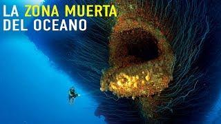 Download ¿Quién vive en la zona muerta del océano? Video