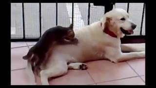 Download Amazing movies best funny animals Video