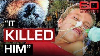 Download Deadly threat of Bat Lyssavirus | 60 Minutes Australia Video