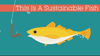 Download This Is A Sustainable Fish Video